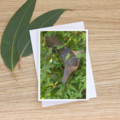 Brown Cuckoo-Dove - Photographic Card #18