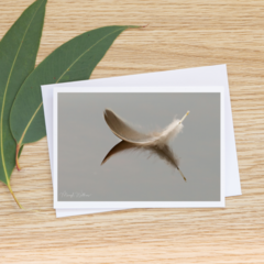 Feather Reflected - Photographic Card #12