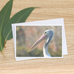 Pelican -  Photographic Card