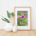Fuchsia - A4 photographic print