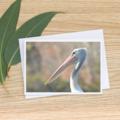 Pelican -  Photographic Card