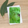 Praying Mantis - Photographic Card