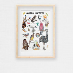 Australian Birds  Poster, Kids Wildlife Resource