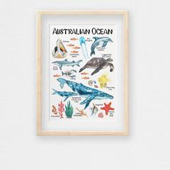 Australian Ocean Poster, Hand-draw Aussie Marine Animals & Plants