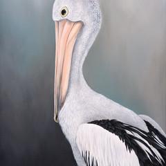 Australian Pelican Print
