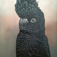 Elvis The Black Cockatoo Print