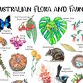 Australian Flora and Fauna Illustration, Botanical Print