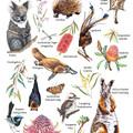 Australian Bush Wildlife Poster, Kids Wildlife Resource