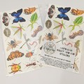 Wall and Stationary Stickers - 16 Australian Native Bugs and Insect Stickers
