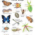 Australian Insects and Bugs Print, Kids Learning Resource A3 or A4 Size