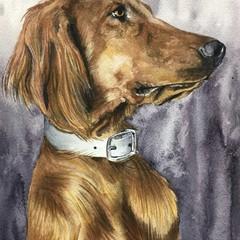 A4 Custom Watercolour Pet Portrait