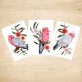 Pink and Grey Galah Australian Bird Art Prints Set of 3, Bird Art Print