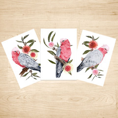 Pink and Grey Galah Australian Bird Art Prints Set of 3, Bird Art Print