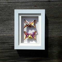 Exquisite Butterflies - colourful and cheerful gift