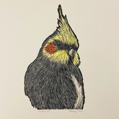 Australian Birds - Cockatiel Lino-print and Watercolour