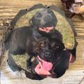 Wood slice pet portrait, Free Shipping, pet keepsake, custom rustic wood gift
