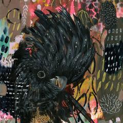 Demi the Black Cockatoo