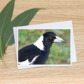 Magpie - Photographic Card