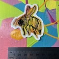 Watercolour and Ink Bee Illustration Sticker - Pink and Orange