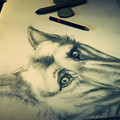 Pet Portrait - custom