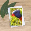 Rainbow Lorikeet  - Photographic Card
