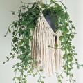Macrame plant hanger with fringing