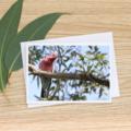 Male Galah - Photographic Card