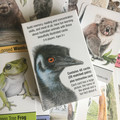 Memory & Snap Cards Australian Wildlife, set of 40 cards (20 matching pairs)