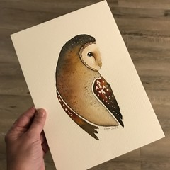 Original Watercolour Art Barn Owl