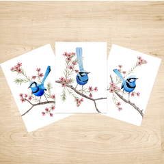 Splendid Blue Wren Australian Bird Art Prints Set of 3, Bird Art Print A5 or A4