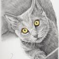 Pet Portrait A3 BW Custom illustration of animal pet dog cat horse bird wildlife