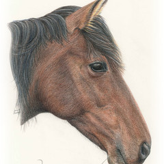 Pet Portrait A3 COLOUR Custom illustration of animal pet dog cat horse wildlife