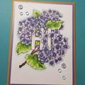 Hydrangea Hi card