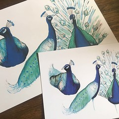 3 Peacock Prints - 2 Sizes Available
