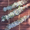 Mugwort & Wormwood Smudge Stick