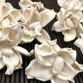 Shola Gardenia - White cream - Flowers - Natural - Wedding, Christmas - 12pcs