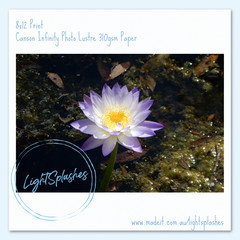 Waterlily 1