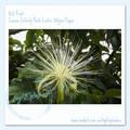 "Tropical Malabar Chestnut (or ""Money Tree"")"