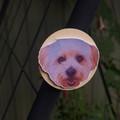 Custom Handmade Pet Magnet