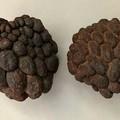 Ata fruits - Brown - Dryed - Natural - Floral- 2pcs - Pods