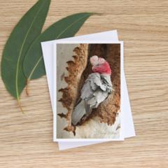 Galah - Photographic Card #3