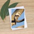Kookaburra sits in the old gum tree - Photographic Card #1