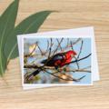Crimson Rosella - Photographic Card #2