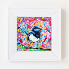 Pink Blue Fairy Wren 8 x 8 Inches Print.
