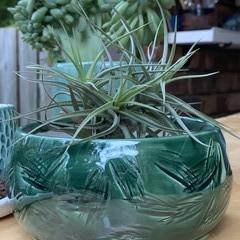 Textured Jungle Gem Bowl