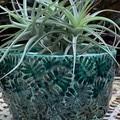Jade Leaf Planter