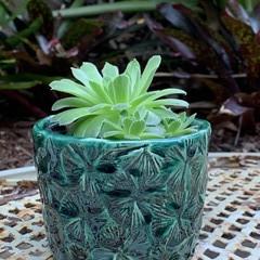 Star Flower Textured Jade Planter