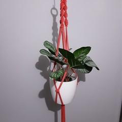 Watermelon / coral coloured Large Macrame Plant Pot Hanger