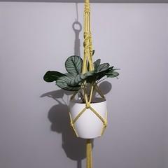 Lemon coloured Large Macrame Plant Pot Hanger