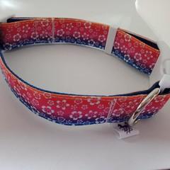 Tropical flower rainbow adjustable dog collars medium / large